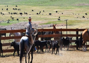 Baker County cattle roundup