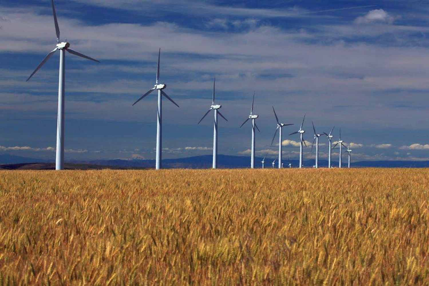Gilliam County wheat fields and turbines