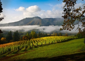 Washington County Vineyards Along Tour Route, Image Credit Joel Zak courtesy of Washington County Visitors Association