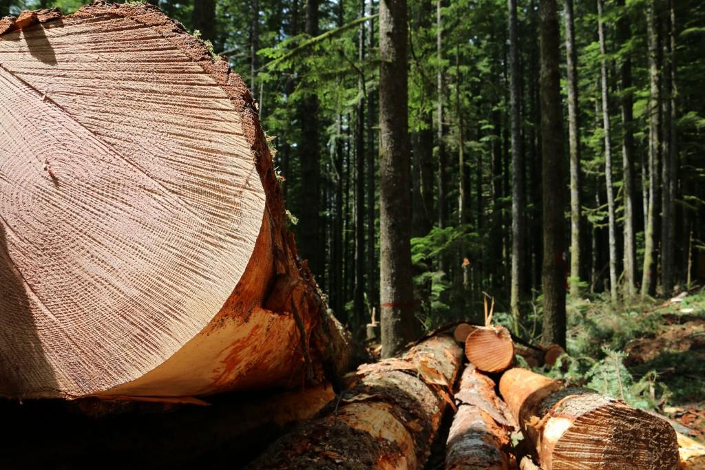Gordon Creek timber demo