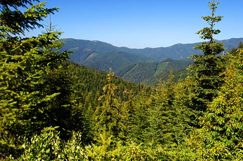 A view of rugged, forested land from BLM Road 13.0 just north of the Douglas County line (Photo No lanDA0117) ImageCredit_Gary Halvorson, Oregon State Archives